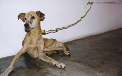 Cruauté envers ses chiens : 3 mois de prison ferme