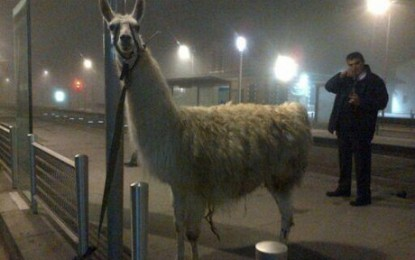 L'histoire de Serge le lama